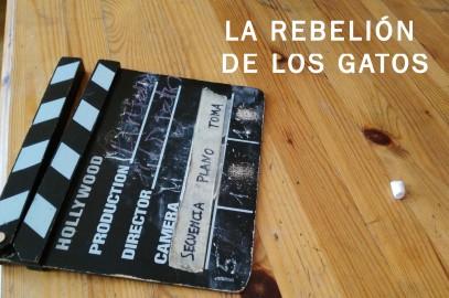 """""""La rebelión de los gatos"""", vídeo participativo con personas sin hogar"""