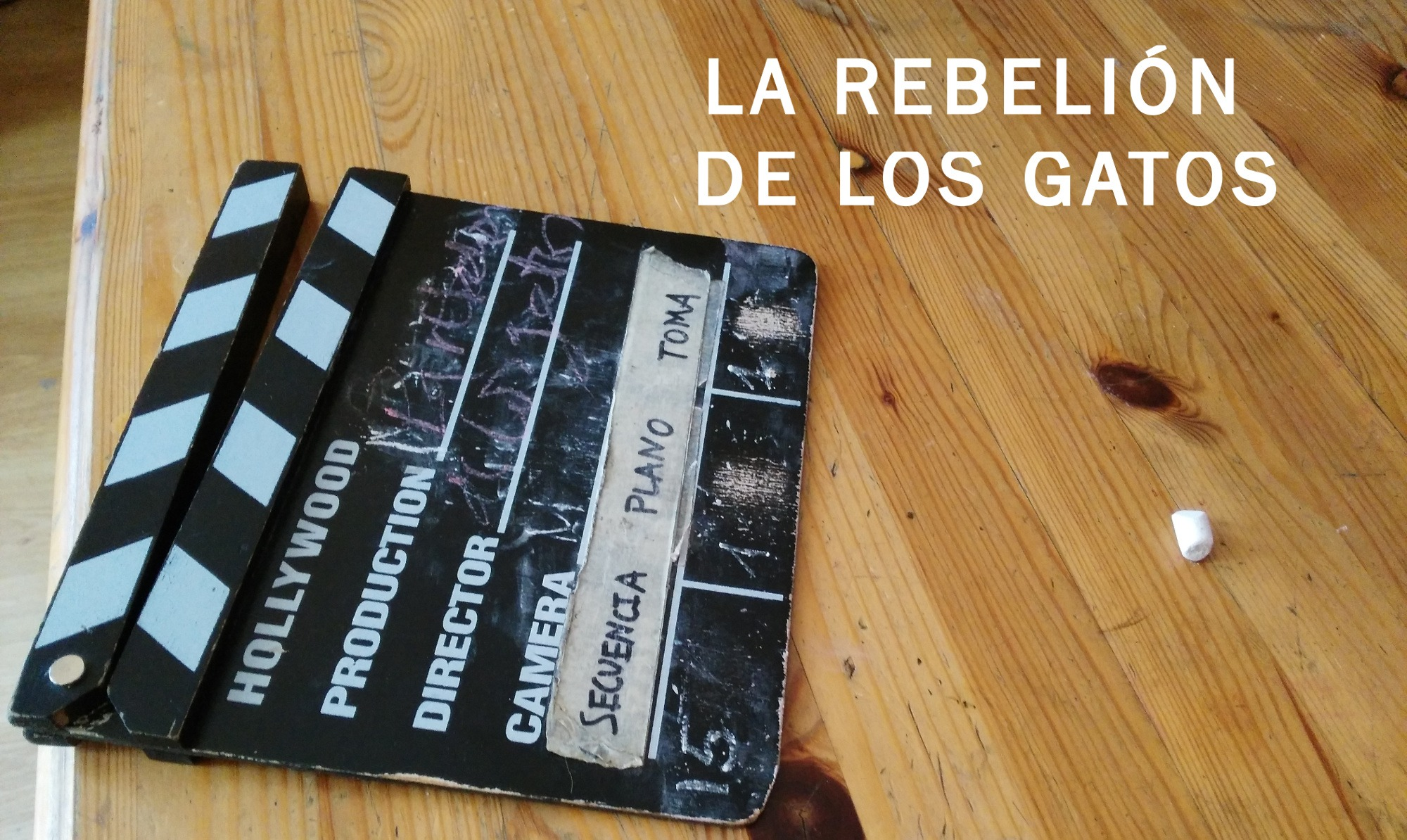 «La rebelión de los gatos», vídeo participativo con personas sin hogar